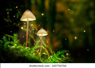 Stunning mushrooms on moss and fireflies in forest at dusk