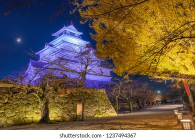 A stunning night scene of full bloom of ginkgo  blossom at Tsuruga-jo castle, light up at night time. Aizu Wakamatsu, Fukushima Japan.