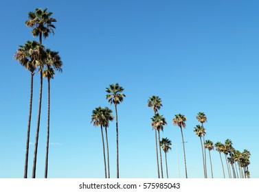Stunning palms with cloudless sky as a background San Diego, California, United States