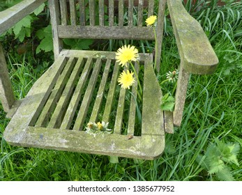 stunning picture from dandelions growing through the slats of  a wodden garden chair