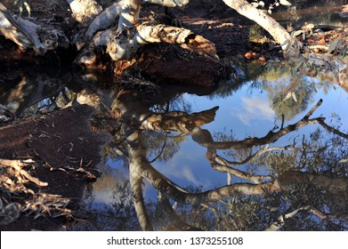 Stunning reflection of the cloudy sky and a ghost gum tree, in a small pool of still water.