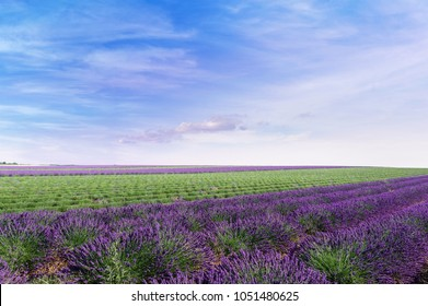 Stunning rural landscape with lavender field, sunflower field and Bee hives on background. Plateau of Valensole, Provence, France