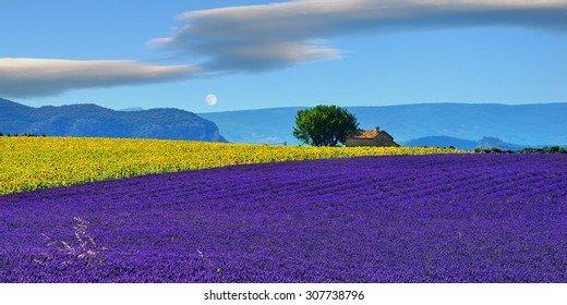 Stunning rural landscape with lavender field, sunflower field and old farmhouse on background at evening time. Plateau of Valensole, Provence, France