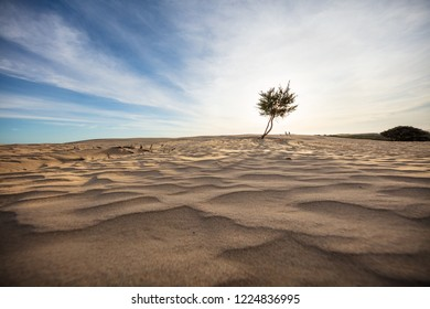 Stunning sand dunes and tree at sunset at the Big Drift in Wilsons Promontory national park, Victoria, Australia