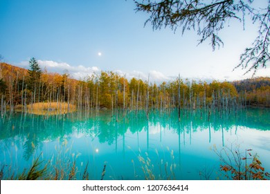 Stunning scene fall foliage at Shirogane Blue Pond, Biei, Hokkaido, Japan
