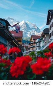 Stunning shot through a bush of roses of the alpine village Wengen, located in the Jungfrau Region of Switzerland, Europe.