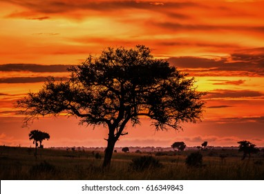 Stunning sky at dawn and an odd tree in the savannah. Sunset  in Murchisons Falls National Park. Africa. Uganda. An excellent illustration.