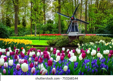 Stunning spring landscape, famous Keukenhof garden with colorful fresh tulips, flowers and Dutch windmill in background, Netherlands, Europe