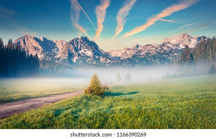 Stunning summer sunrise in Durmitor Nacionalni Park. Exotic foggy view of of Montenegro countryside, Zabljak town location. Beautiful world of Mediterranean countries. Traveling concept background.