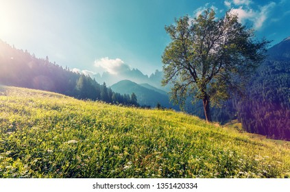 Stunning sunny morning scene. Beautiful view of idyllic alpine mountain scenery with blooming meadows and tree glowing sunlight, in beautiful sunny day with blue sky in spring. Nature Landscape