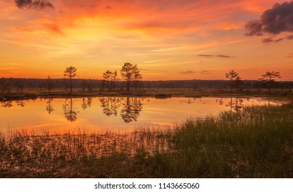 Stunning sunset in the swamp. View of sunset clouds reflected in the bog. Amazing nature of Estonia.
