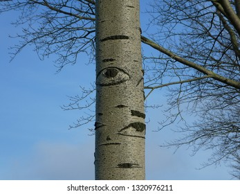 stunning tree with pattern on the bark look like eyes