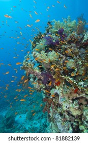 A stunning tropical coral reef scene with soft corals and fish