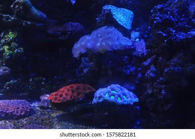 stunning underwater world of corals