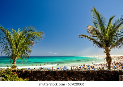 Stunning view of Corralejo Beach (Grandes Playas de Corralejo) on Fuerteventura, Canary Islands, Spain, Europe. Clear turquoise water and two palm trees in the foreground. Popular tourist destination.