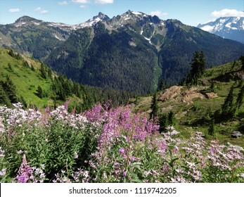 A stunning view of Goat Mountain from a meadow full of blooming wildflowers in the North Cascade mountain