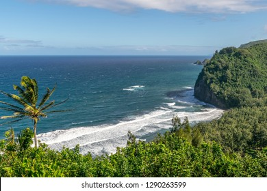 Stunning view of the Kohala Coast on the north shore of the Big Island of Hawaii, USA. Photo taken at Pololu Valley Lookout. Popular tourist destination. Palm tree and beautiful coast in foreground.