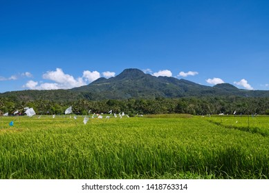 Stunning view on volcano on Camiguin Island, Philippines with rice fields in front of it