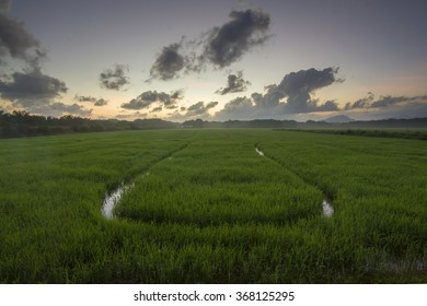 Stunning view of paddy field during sunrise