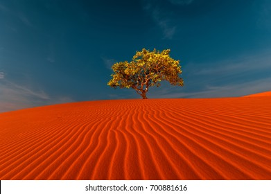 Stunning view of rippled sand dunes and lonely tree growing under amazing blue sky at drought desert landscape. Global warming concept. Nature background