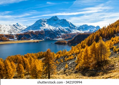 Stunning view of Sils lake and the Piz da la Margna swiss alps in Upper Engadine with golden trees  in autumn, Canton of Grisons, Switzerland.
