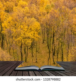 Stunning view of Silver Birch forest with golden leaves in Autumn Fall landscape scene of Upper Padley gorge in Peak District in England coming out of pages in magical story book