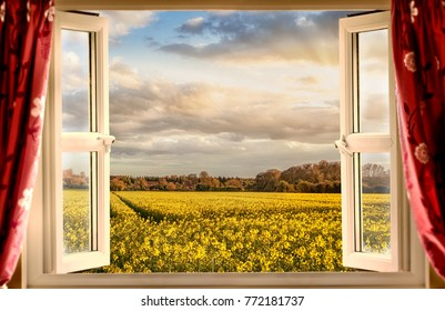 Stunning view through open window of yellow crops and beautiful sunset through clouds. Evening rays of orange sunshine burst through the house window and open curtains