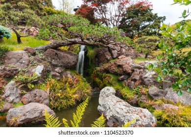Stunning waterfall in San Francisco Japanese Tea Garden