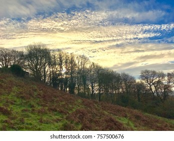 Stunning white high clouds over beech trees with brown bracken and green grass in the foreground rural countryside scene blue sky