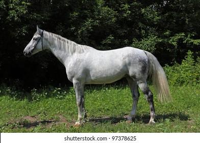 Stunning white horse in the sun