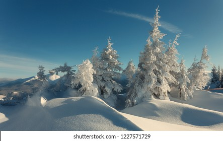 Stunning winter forest landscape in sunny day. Icy snowy fir trees glowin in sunlight. winter holiday concept. travel day. wonderland in winter. Amazing Nature background. Christmas holyday concept