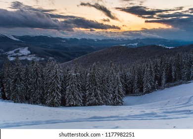 stunning winter view in mountains, spruce covered snow on background forest in morning dawn, beauty nature scenery, wonderful wintry cold weather,  Carpathian image, Ukraine, Europe