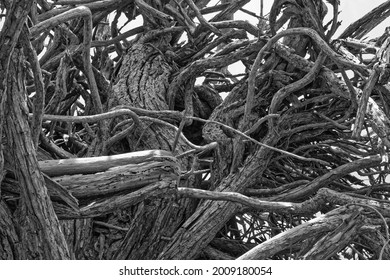 Stunted grotesquely twisted trees. Dead.