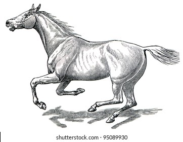 """The style walk a horse. Full gallop. Publication of the book """"Meyers Konversations-Lexikon"""", Volume 7, Leipzig, Germany, 1910"""