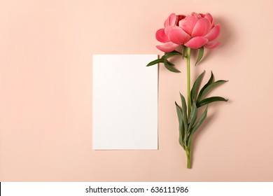 Styled feminine flat lay on pale pastel pink background, top view. Minimal woman's desktop with blank page mock up and peony flower, Creative concept, empty greeting card