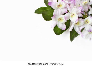 Styled stock photo. Feminine desktop scene. Dendrobium orchid flowers on white table background. Empty space. Floral frame, web banner. Top view. Tropical, summer concept.
