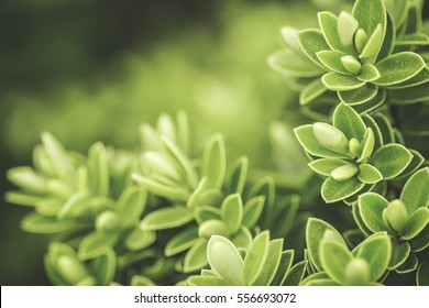 Stylised macro shot of a generic young green shrub in natural light.