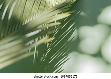 Stylish background for presentation. Palm leaf on a green surface with shadow.