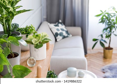 Stylish and boho home interior of living room with wooden shelf, design gray sofa, a lot of plants and elegant accessories. Botany and minimalistic gray home decor with plants. Cozy home decor.