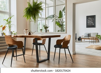 Stylish and botany interior of dining room with design craft wooden table, chairs, furniture, a lof of plants, window, poster map and elegant accessories in modern home decor. Template.