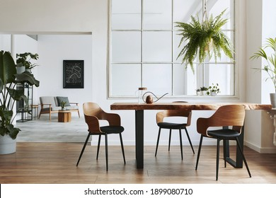 Stylish and botany interior of dining room with design craft wooden table, chairs, a lof of plants, window, poster map and elegant accessories in modern home decor. Template. - Shutterstock ID 1899080710