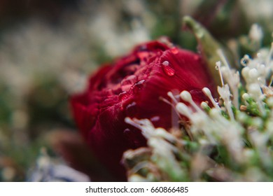 Stylish bouquet in red color of Marsala