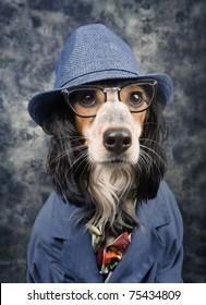 Stylish business dog