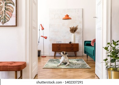 Dog On Couch Images, Stock Photos & Vectors | Shutterstock
