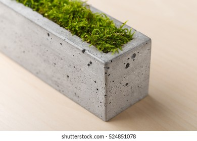 Stylish concrete planters with green moss on the table in the office