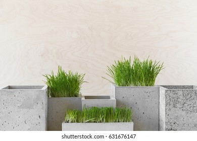 Stylish concrete pots with green grass on a table indoors