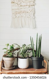 Stylish green plants in pots on wooden vintage stand on background of white rustic wall with embroidery hanging. Peperomia, sansevieria, dracaena plants, modern room decor