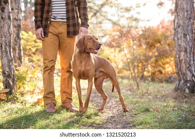 Stylish guy with a dog breed Hungarian Pointer walks in the woods. Hunting dog training