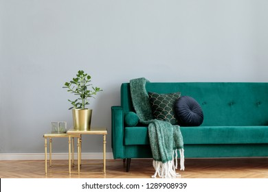 Stylish home interior with green velvet design sofa, gold coffee table, plant  and elegant blanket and pillows. Copy space for inscription, mock up poster. Brown wooden parquet.