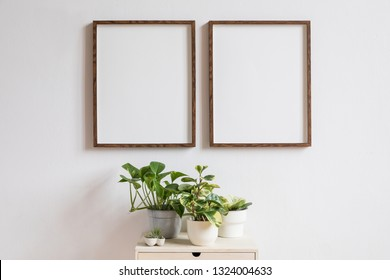 Stylish home interior with two brown wooden mock up photo frames above the wooden shelf with plants composition in design pots. Modern and minimalistic concept of white room decor.
